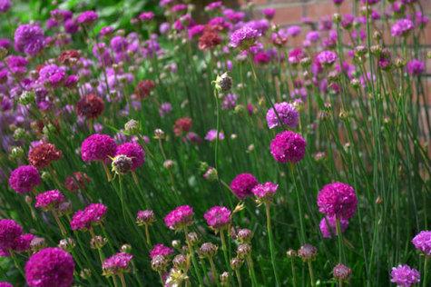 Chartwellflowers01
