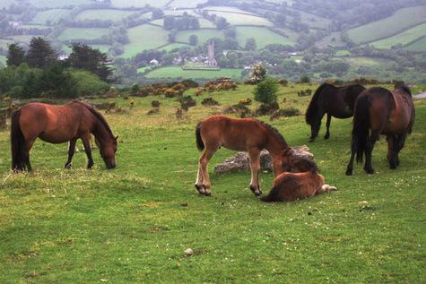 Dartmoor02